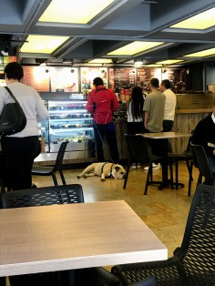 dogs are allowed in most cafes