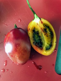 Tamarillo - very sour, but a texture of a tomato it was weird.
