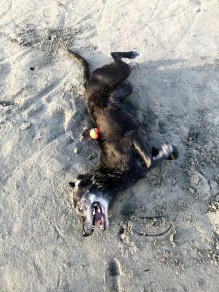 on the 3rd day, zoe got to roll in the sand