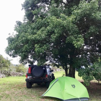 Our campsite under the tree
