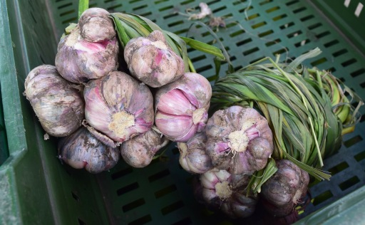 Garlic - Not that common in Colombia